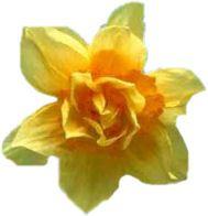 Tube PSP : Fleur